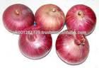 Wholesale fresh red onion , Zwiebeln , uien , cebollas , oignons , Payaz