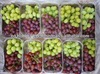 Red Global and Crimson Grapes for sale