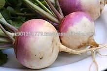 Pakistan Exporter of fresh vegetables , Fresh turnip , Competitive price