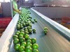 HKVIMEX'S Supply Bulk Fresh Lime Seson 2014