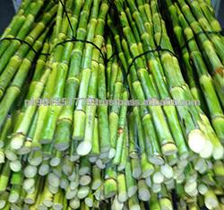 Pakistan Top quality Sugarcane , bulk Fresh Sugarcane Sticks , Yellow Green sugarcane