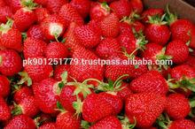 New crop frozen fresh strawberry , Grade A fresh Frozen Fruits Strawberry , Export Fresh Fruit strawberry