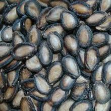 Best quality Melon Seeds