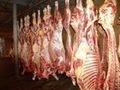 Congelado cordeiro / cabra / carne de carneiro toda carcass em 10 / 6 / 4 maneira cortes