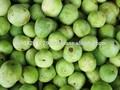 Tinda, tinday, exportateur pakistanais, légumes frais