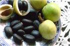 jatropha oil seeds