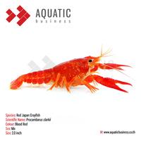 Live Crayfish, Lobster, Tropical Aquarium Fish