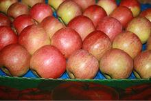 Fresh apples Fuji