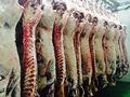 viande de boeuf halal