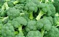 نوعية جيدة القرنبيط الأخضر الطازج