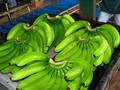 verde fresco de banano cavendish