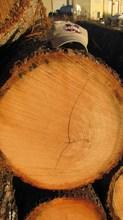 Veneer and Saw Logs