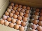 Premium Grade table eggs