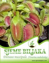 """Venus Flytrap """"Dionaea Muscipula"""" - 15 seeds"""
