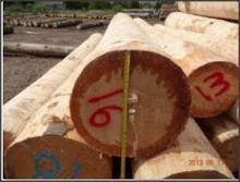White Pine Softwood Logs 33