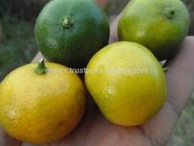 fresh Kumquat, Fresh Lemon, seedless Lime