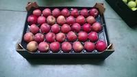 Fresh 2014 crop apples