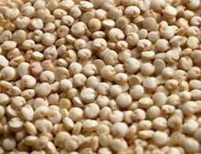Natural quinoa sementes