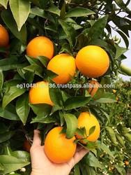 2014 best fresh citrus fruit factory price