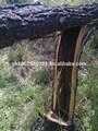 Africano black wood( dalbergia melanoxylon)