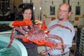 Live caranguejo de rei vermelho | rei norueguês | caranguejo caranguejo do alasca rei