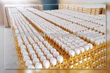 Fresh Hatching Eggs