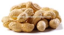 peanut kernels ROASTED PEANUTS BIGGEST PEANUT and PUMPKIN SEEDS FACTORY