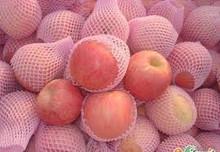 New Crop South African Fresh Fuji Apple