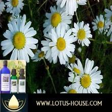 Chamomile German - CERTIFIED Organic 100% Essential Oil @ Lotus House (10ml) - Free Shipping Worldwid