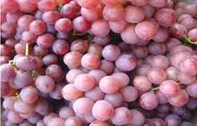 Sweet Fresh Grapes