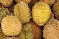 Fresh Durian Fruits