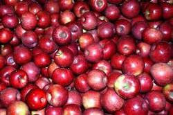 Export Fresh Red Delicious Apple Fruit Fresh Apple