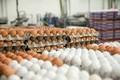 Ovos de galinha, peças de frango