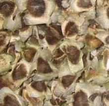Dried Moringa Seed (Herb grade)