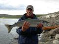 U003e u003e Atlantic Salmon Norwegian Salmon trực tiếp Salmon philê tươi và đông lạnh