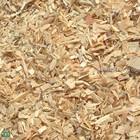 Eucalyptus Wood chips