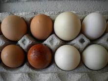 De alta calidad de pollo huevos frescos, los huevos de pato