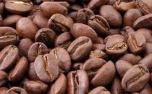 High Quality Robusta and Arabica Coffee