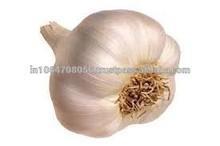 garlic/fresh garlic/garlic natural
