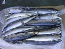 pescados y mariscos congelados de arenque del pacífico