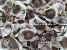 bulk supply high quality moringa seeds