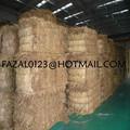 عالية الجودة قش الأرز بنغلاديش/ تصدير التجارة مشارك من البرسيم القش مع رخيصة الثمن