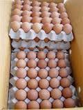 Broilers hatching eggs