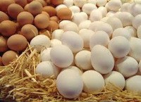 Table Egg Variety and White Part farm fresh chicken eggs