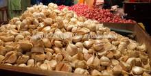 Chinese white garlic