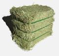 عالية الجودة قش الأرز/ تصدير التجارة مشارك من البرسيم القش مع رخيصة الثمن