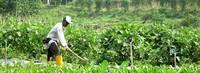 Vegetable Farm Job