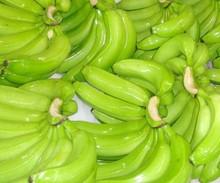 GOOD QUALITY PREMIUM FRESH GREEN BANANA , 100 % NATURAL CAVENDISH GREEN BANANA , CAVENDISH BANANA FOR SALE , KELA