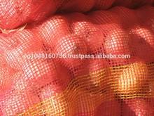 Egyptian Golden Onions