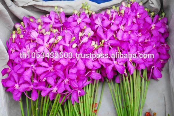 Orchids Wholesale Thailand Wholesale Fresh Cut Orchid